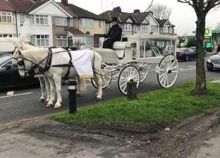 """بـ""""عربة خيل و11 حمامة"""".. بريطانية تنفق 5 آلاف دولار على جنازة كلبها"""