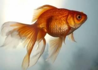 """"""" الإيثانول"""" سر بقاء السمك على قيد الحياة بعد انعدام الأكسجين"""