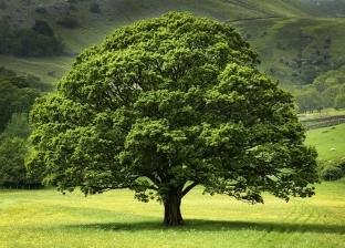 """""""إزرع شجرة"""".. هكذا تحتفل دول العالم بالمساحات الخضراء"""
