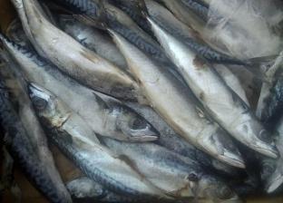 ضبط سيارة محملة بأسماك محظور صيدها من بحيرة قارون في الفيوم