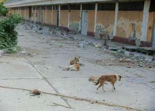 محافظ القاهرة يطالب بتكثيف حملات مكافحة الكلاب الضالة حول المساجد