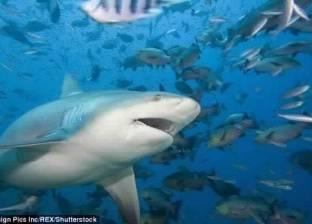 """""""علوم البحار"""": رصد سمكة القرش بالبحر الأحمر.. وظاهرة تتكرر سنويا"""