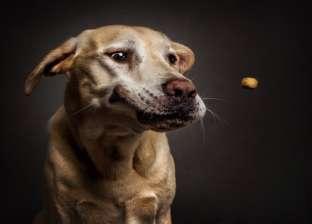 """الكلبة """"لوسي"""" تنقذ سباكا من 50 سنة سجن بتهمة اغتصاب قاصر"""