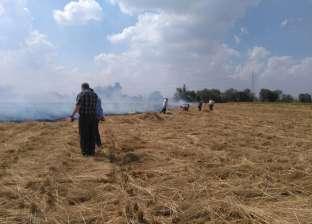 """""""البيئة"""": حصاد 54.4% من محصول الأرز بـ""""المنصورة"""""""