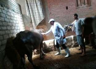 تحصين 182 ألف رأس ماشية ضد الحمى القلاعية في الدقهلية