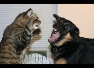 بعد جدل تصديرها.. ماذا رأى العلماء في مسألة أكل القطط والكلاب؟