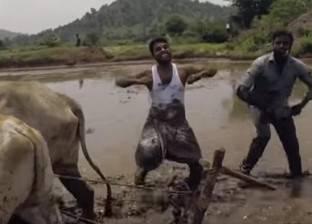 """بالفيديو  هنديان يؤديان رقصة """"كيكي"""" في وحل الأرز مع الثيران"""