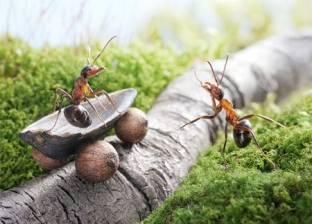 7 خطوات لتجنب ظهور النمل في المنزل والتخلص منه نهائيا