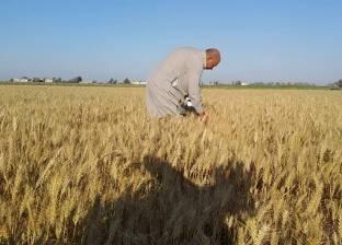 «الزراعة»: تطبيق منظومة جديدة لتقاوي القمح من الموسم المقبل