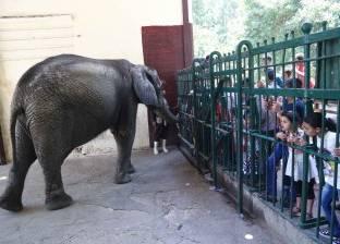 """رغم حريق """"وقفة العيد"""".. حديقة حيوانات الجيزة تستقبل 76 ألف زائر"""