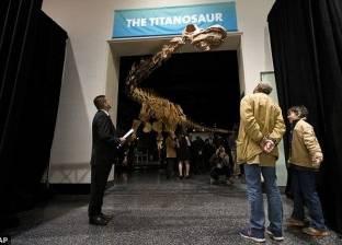 بالصور| بعد اكتشافه في الأرجنتين.. كيف يبدو أكبر ديناصور في العالم؟