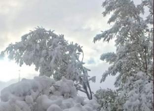 الثلوج غطت الأشجار.. 20 صورة من الصقيع لن تصدق أنها في مصر