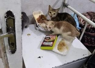 """قطط تهاجم المرضى بمستشفى الصدر بالسويس.. ومواطنون: """"ده استهتار"""""""