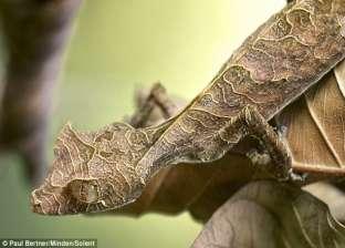 بالصور| حيوانات وحشرات مفترسة تختبئ بين أوراق الشجر بمدغشقر