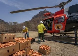 صور.. طائرات تلقي أطنان من الجزر والبطاطا لإنقاذ حيوانات أستراليا