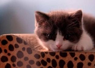 """العقوبة تصل لخمس سنوات.. روسي معرض للسجن بسبب """"قطة"""""""