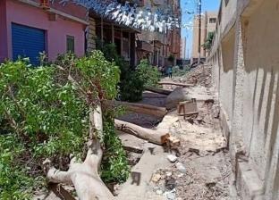 مواطن يحرر محضرا ضد رئيس وحدة محلية بالقليوبية: ارتكبوا مذبحة للأشجار