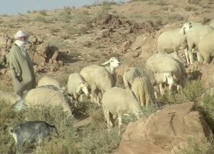 80 قتيلا في اعمال عنف بين مزارعين ورعاة ماشية في نيجيريا