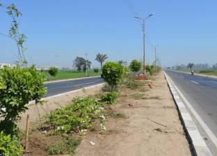 رفع كفاءة المسطحات الخضراء بحي ثالث الإسماعيلية