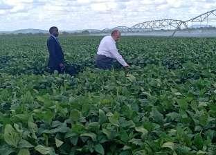 """""""البحوث الزراعية"""": الزراعة العضوية توفر 50% من استخدامات الأسمدة"""