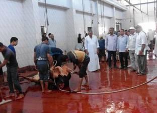 ذبح 5 رؤوس ماشية لتوزيعها على الأسر الأكثر احتياجا بقرى المنيا