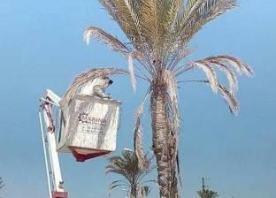 بالصور| استمرار حملات تقليم الأشجار على الطريق الدولي بمدينة رأس سدر