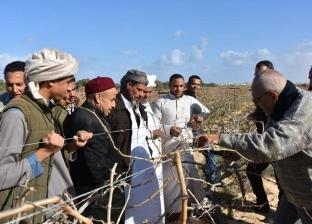 """""""بحوث صحراء مطروح"""" ينظم دورة تدريبية في مجال تقليم أشجار الزيتون"""