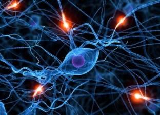 للمرة الأولى.. علماء يرصدون تشكل خلايا الدماغ: أمل جديد لمرضى ألزهايمر