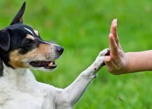 ولاية أمريكية تعين محامين للدفاع عن حقوق الحيوانات