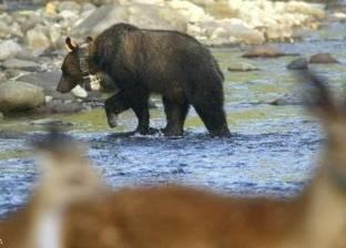 """زوجان يعاقبان صغيرهما بتركه في الغابة بين """"الدببة"""""""