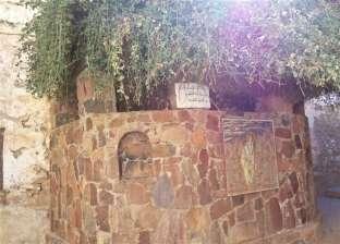 """شجرة """"العليقة الملتهبة"""" شاهد عيان على قدسية دير سانت كاترين"""