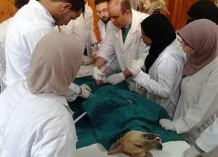 """بالصور  دورة تدريبية في جامعة قناة السويس بعنوان """"جراحات الحيوانات الأليفة"""""""