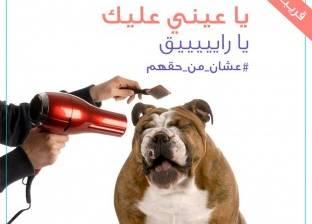 """من التطعيم لـ""""الزواج والتجميل"""".. تطبيق جديد لرعاية الكلاب بالمنازل"""