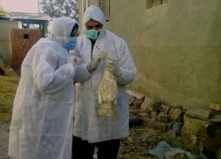 الزراعة: تحصين أكثر من مليون طائر ضد الأمراض الوبائية