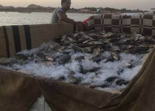 ضبط 1500 كيلو سمك فاسد في الشرقية