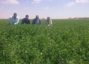 """وكيل """"زراعة كفرالشيخ"""": زراعة 52 ألف فدان """"بنجر"""" في المحافظة"""