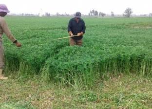 """وكيل """"زرعة كفر الشيخ"""": حصاد 175 ألف فدان من محصول الأرز"""