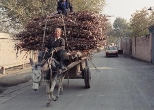 رأفة بها.. اليونان تصدر قانون يمنع أصحاب الوزن الزائد من ركوب الحمير