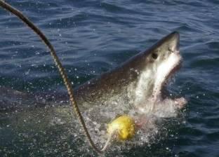 إعادة فتح شاطئ بعد هجوم نادر لأسماك القرش