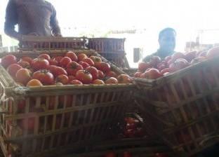 مصر تقتحم أسواق كندا والمغرب بصادرات الطماطم وشتلات العنب