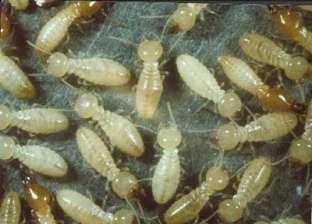 """متحدث الزراعة: """"المواطن مبيقدرش يكتشف النمل الأبيض غير بعد حدوث الضرر"""""""