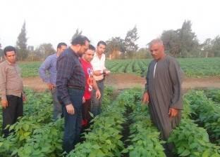 المنوفية.. «الشهداء» يعمم «الزراعة النظيفة» بدلاً من الأسمدة