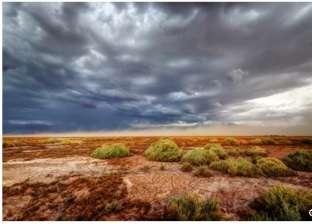 """المياه """"القاتلة"""".. أدق أشكال الحياة في صحراء تشيلي تموت بسبب المطر"""