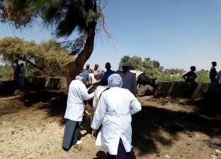 """""""بيطري الوادي الجديد"""" ينتهي من تحصين 14861 رأس ماشية ضد الحمى القلاعية"""