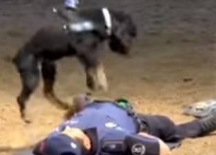 بالفيديو| لحظة إنقاذ كلب بوليسي لمدربه