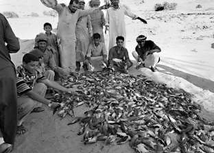 صيد الطيور المهاجرة «متعة وأكل عيش»