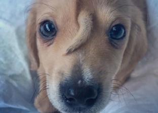 """فيديو.. """"ذيله في وجهه"""".. حالة نادرة لـ""""كلب"""" تكسب تعاطف الجميع"""