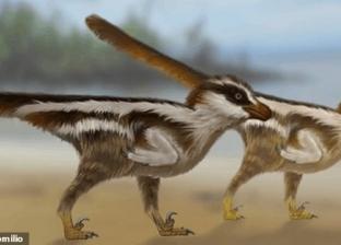 في حجم عصفور.. اكتشاف آثار أقدام لأصغر ديناصور في العالم