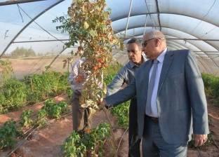 """""""الزملوط"""" يتفقد مشروع الصوب الزراعية للشباب بـ""""مرزوق"""" في الوادي الجديد"""