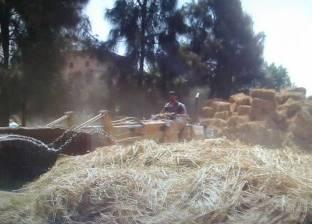 بالصور| زراعة الشرقية : حصاد 5 % من محصول الأرز وتحرير 17 محضر لحرق القش